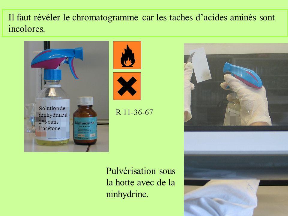 Pulvérisation sous la hotte avec de la ninhydrine.