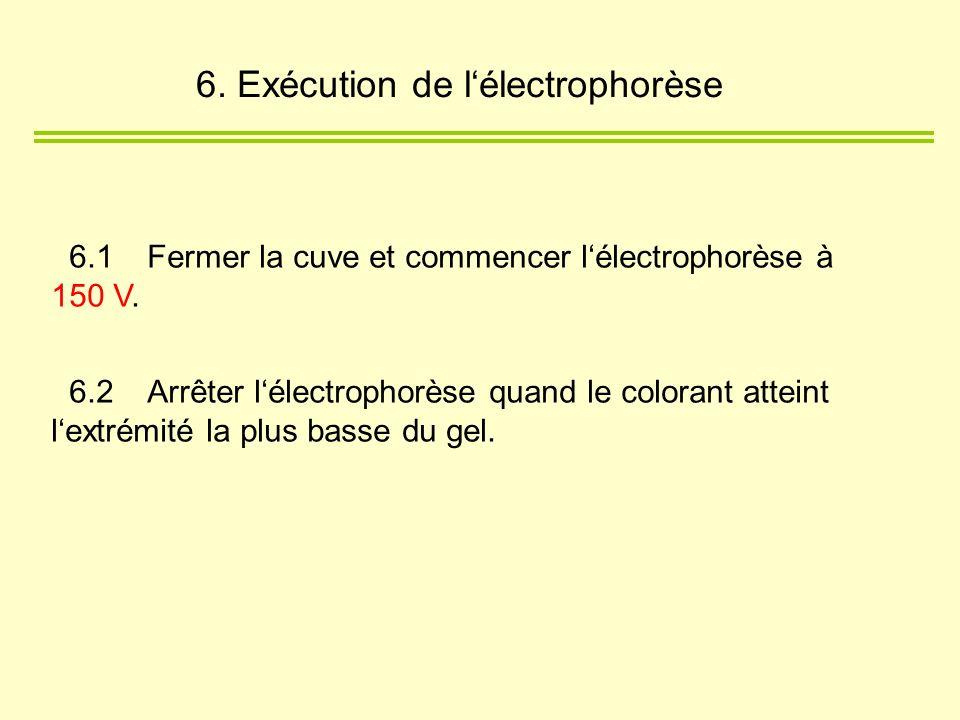 6. Exécution de l'électrophorèse
