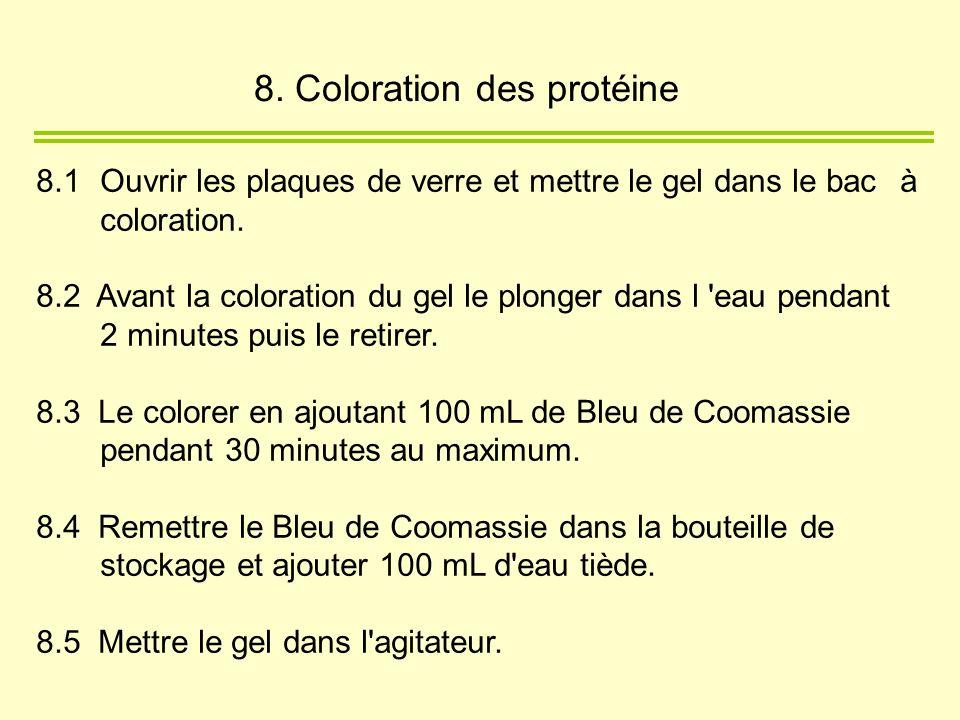 8. Coloration des protéine