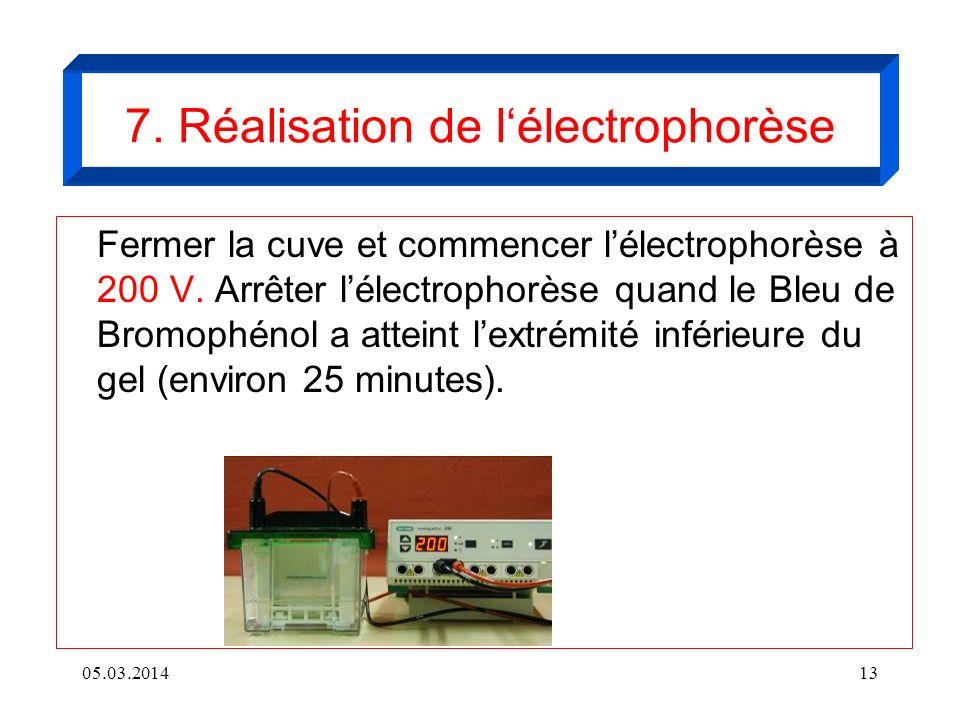 7. Réalisation de l'électrophorèse