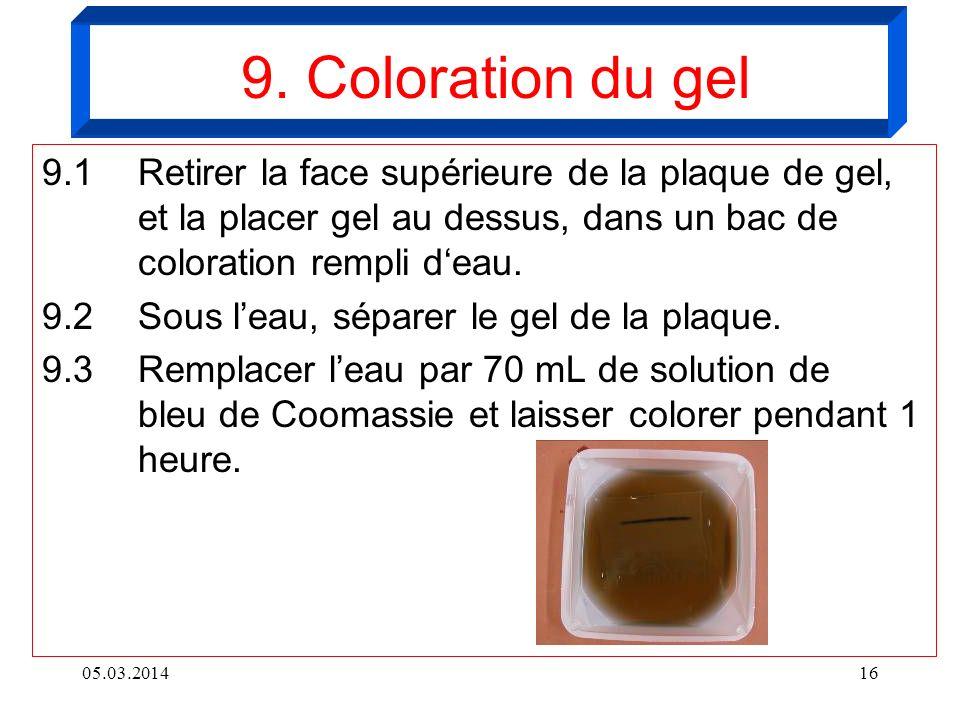 9. Coloration du gel9.1 Retirer la face supérieure de la plaque de gel, et la placer gel au dessus, dans un bac de coloration rempli d'eau.