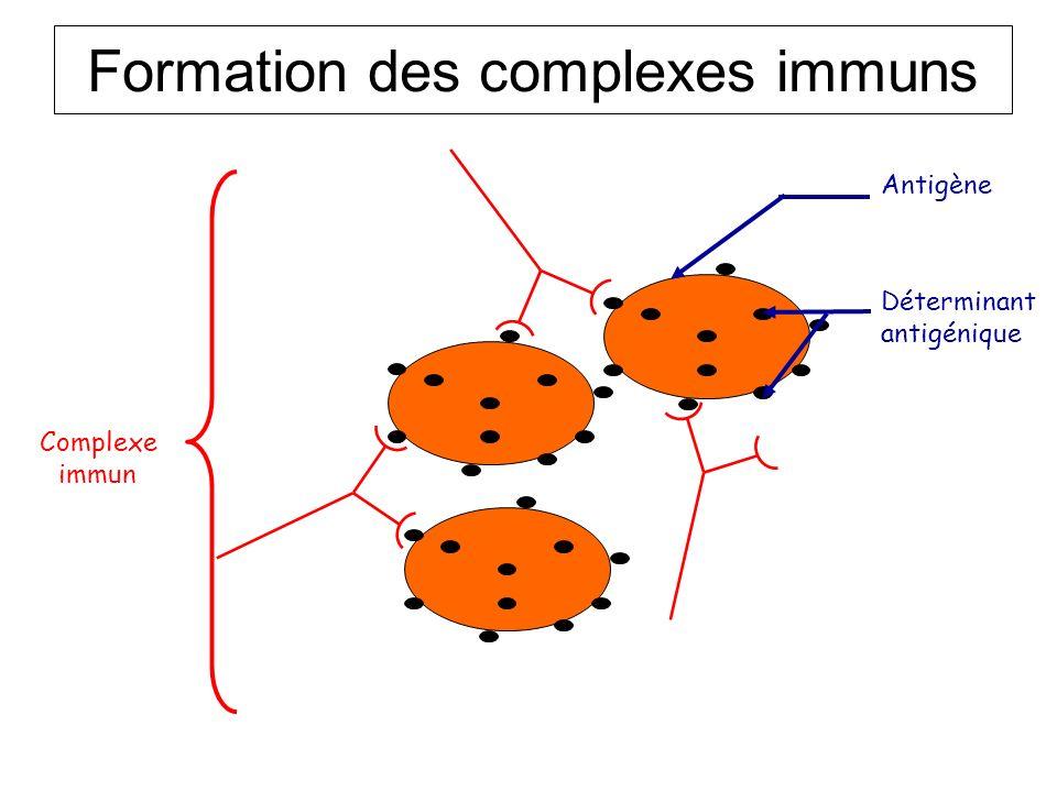 Formation des complexes immuns