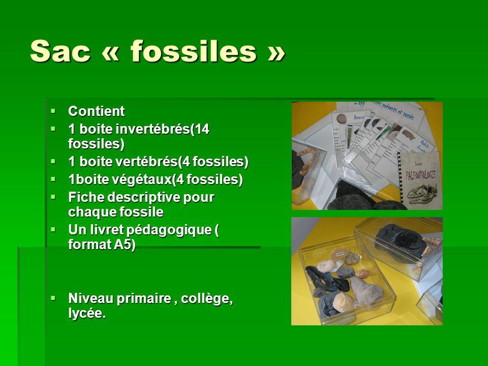 Sac « fossiles » Contient 1 boite invertébrés(14 fossiles)