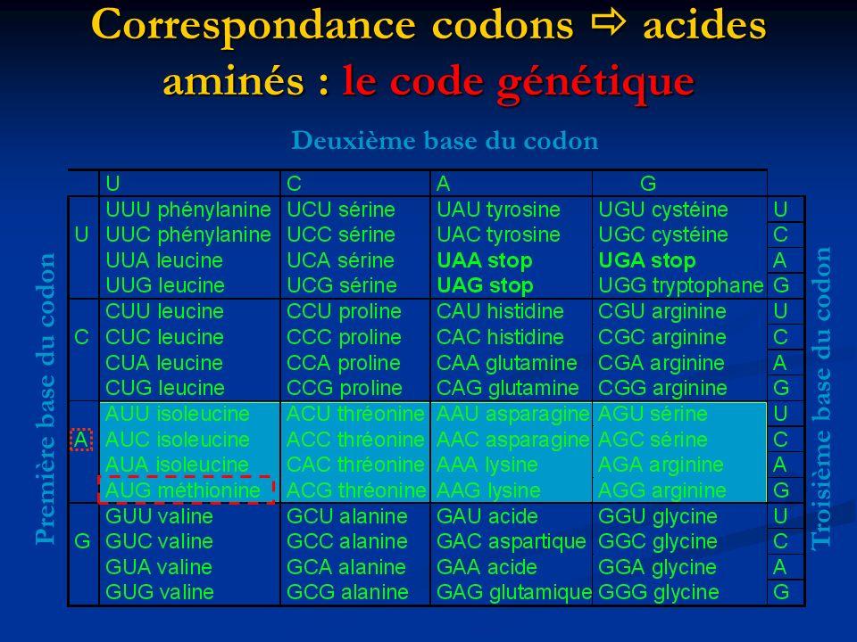 Correspondance codons  acides aminés : le code génétique