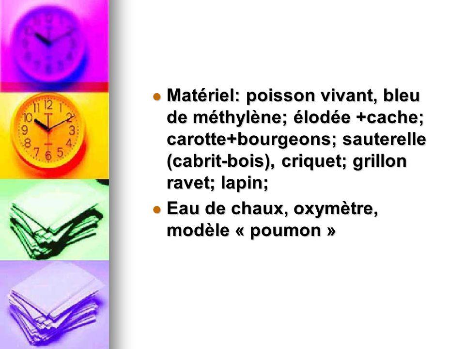 Matériel: poisson vivant, bleu de méthylène; élodée +cache; carotte+bourgeons; sauterelle (cabrit-bois), criquet; grillon ravet; lapin;