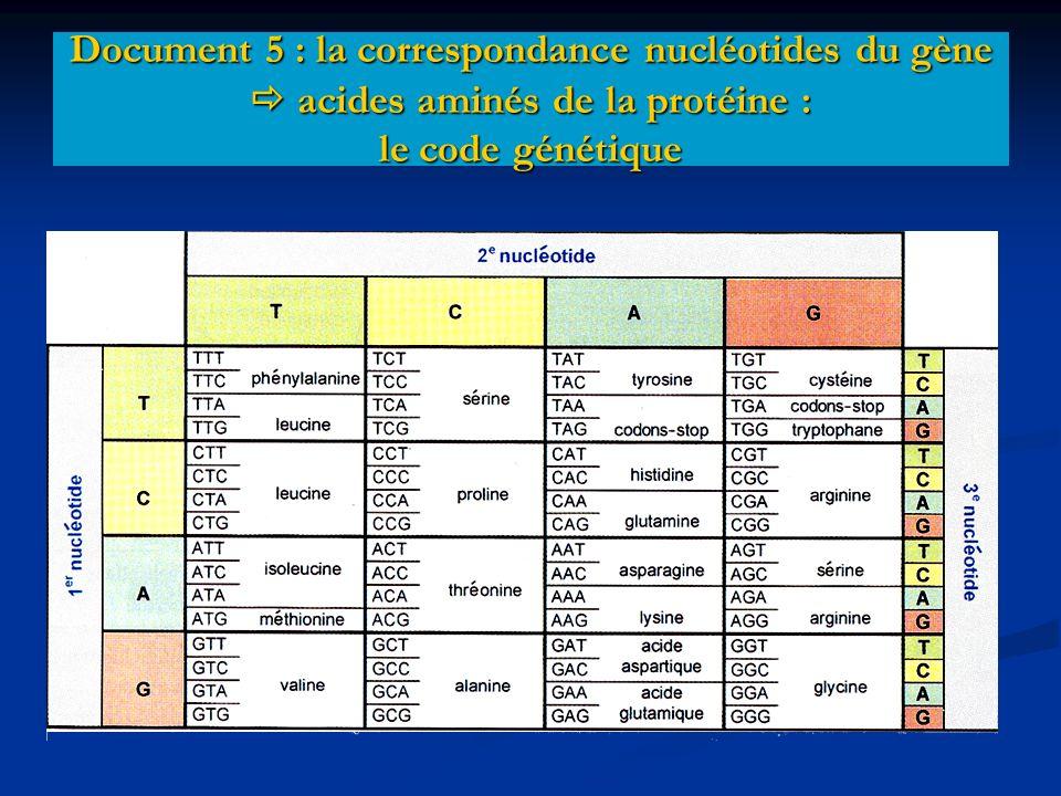 Document 5 : la correspondance nucléotides du gène  acides aminés de la protéine : le code génétique