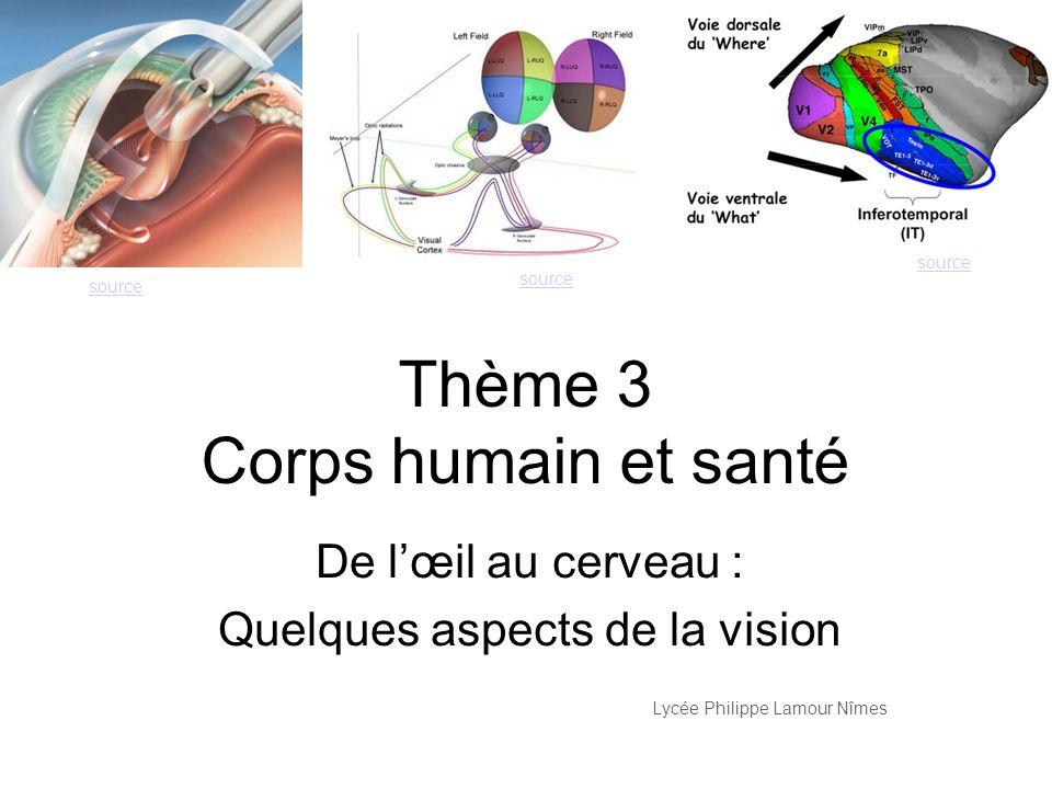 Thème 3 Corps humain et santé
