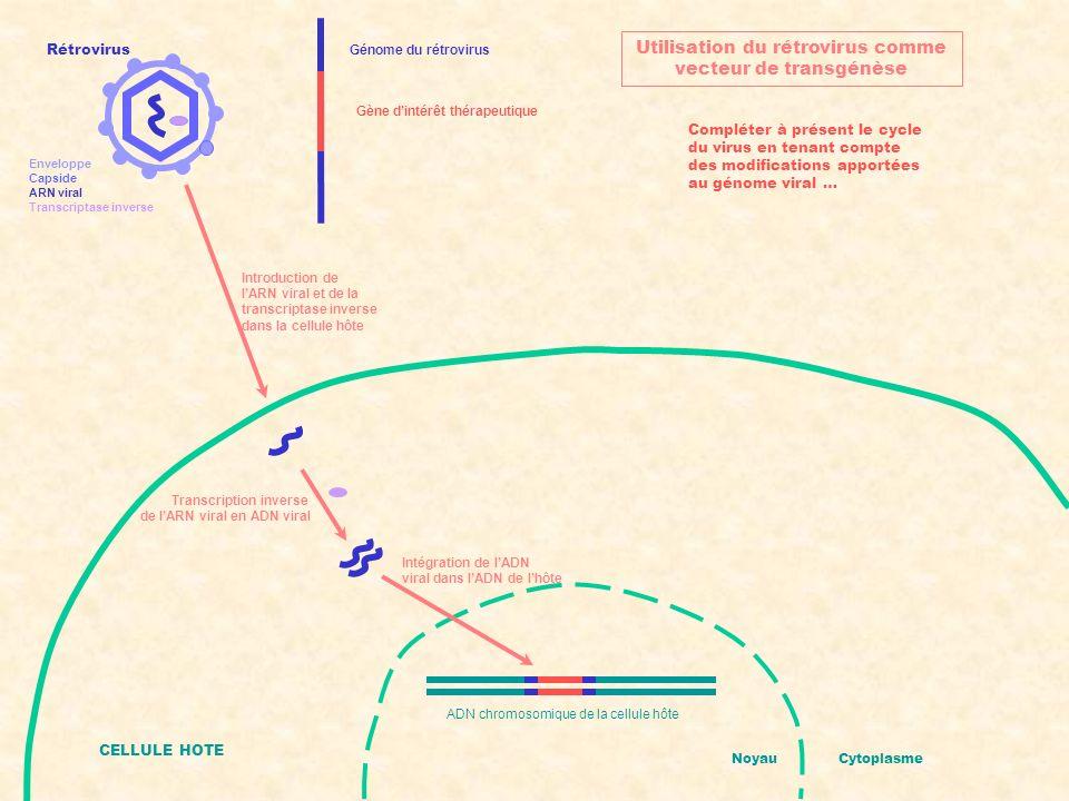 Utilisation du rétrovirus comme vecteur de transgénèse