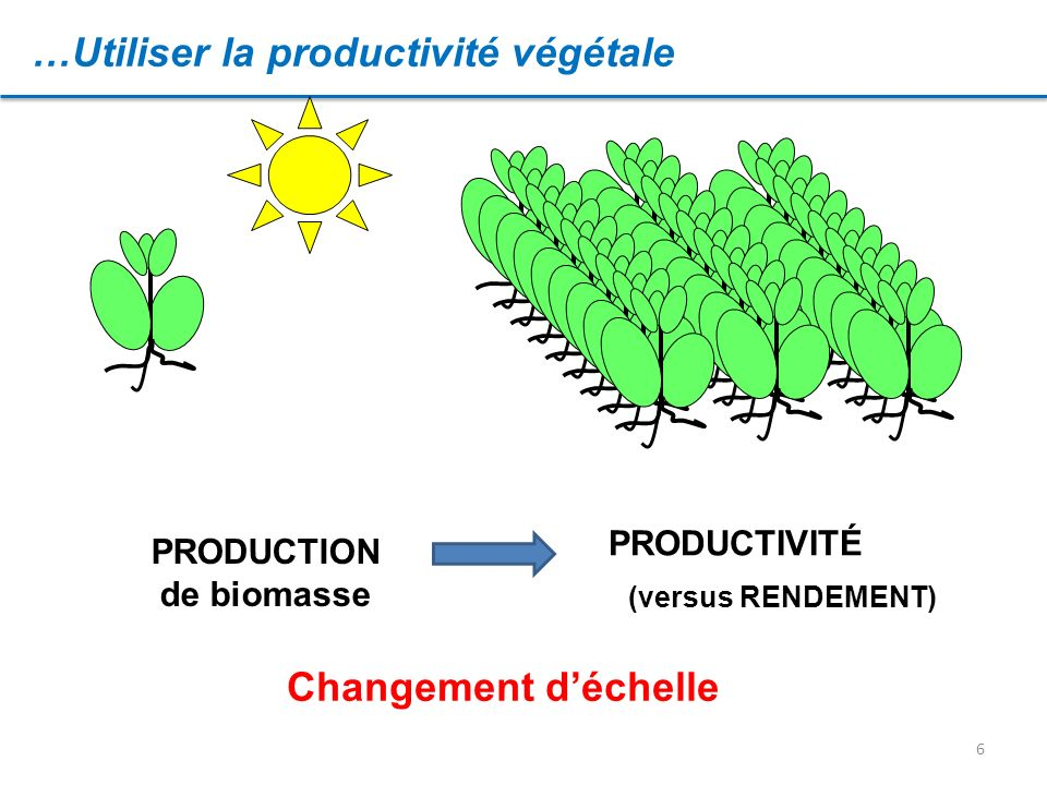 PRODUCTION de biomasse