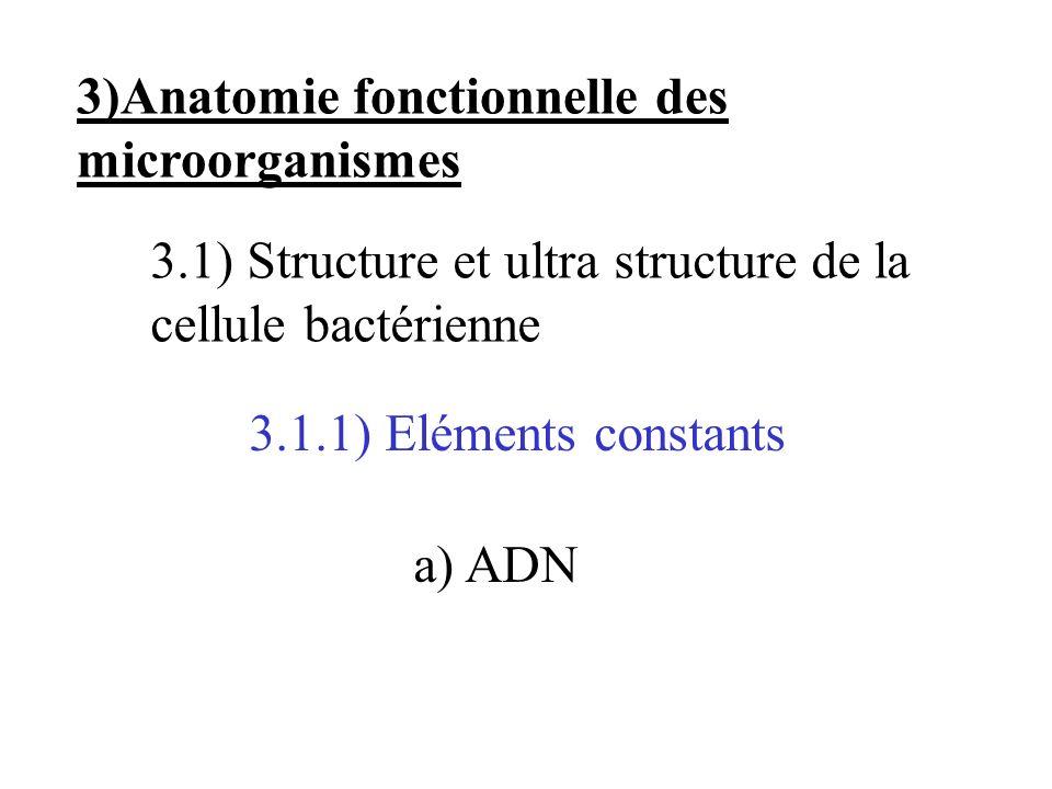 3)Anatomie fonctionnelle des microorganismes