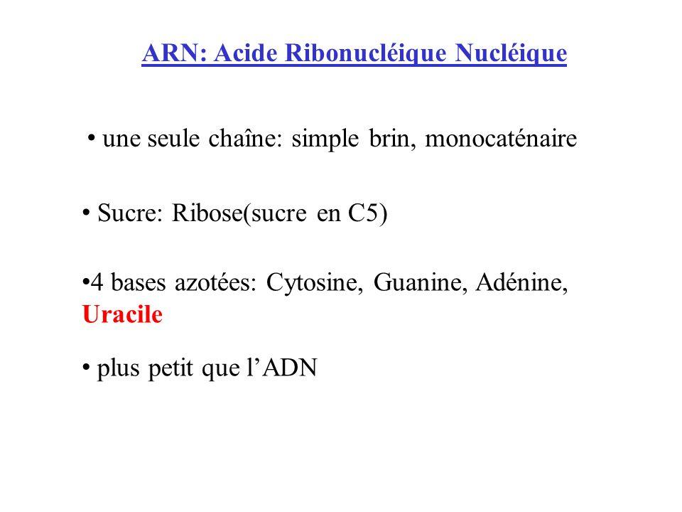 ARN: Acide Ribonucléique Nucléique