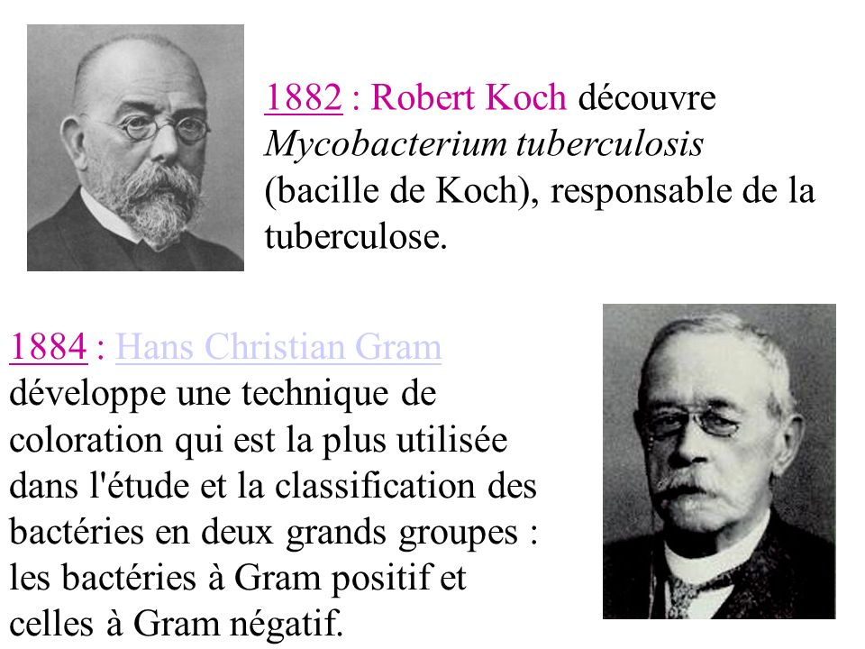 1882 : Robert Koch découvre Mycobacterium tuberculosis (bacille de Koch), responsable de la tuberculose.
