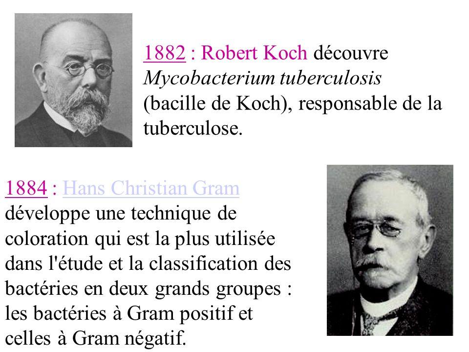 1882 : Robert Koch découvreMycobacterium tuberculosis (bacille de Koch), responsable de la tuberculose.