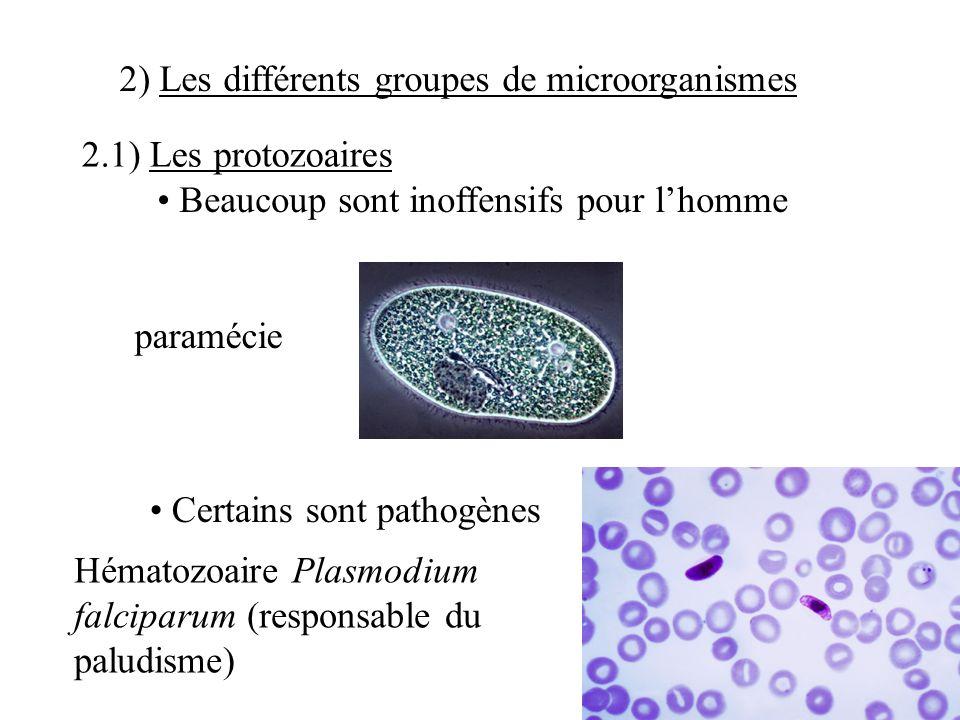 2) Les différents groupes de microorganismes