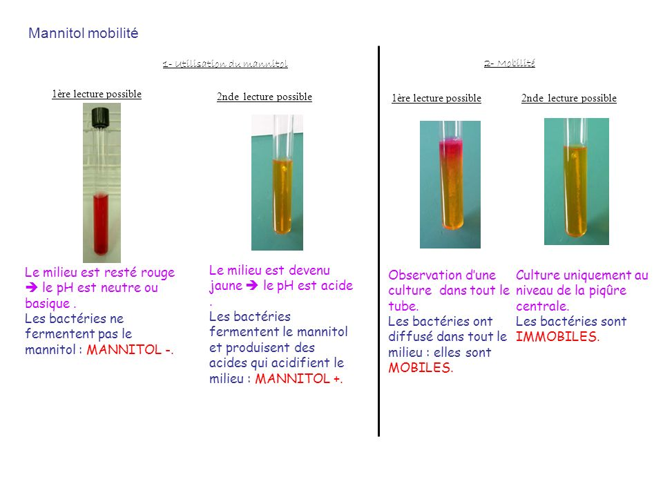 Mannitol mobilité1- Utilisation du mannitol. 2- Mobilité. 1ère lecture possible. 2nde lecture possible.