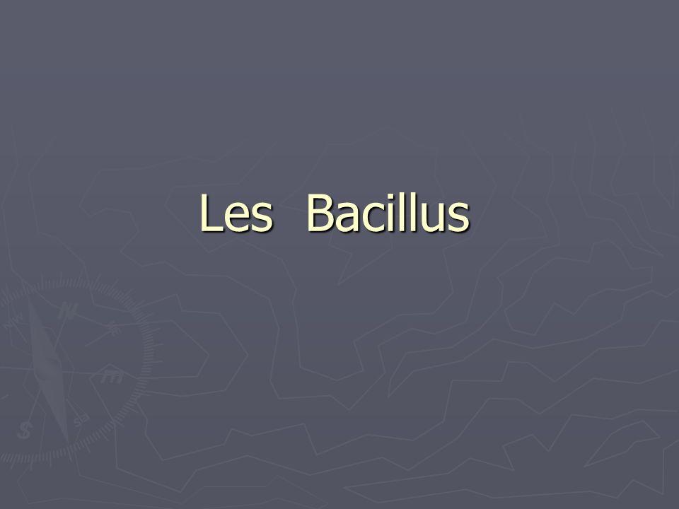 Les Bacillus