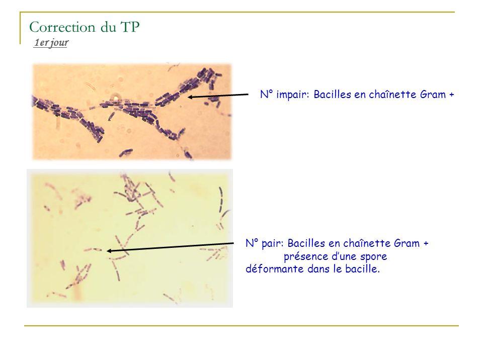 Correction du TP 1er jour N° impair: Bacilles en chaînette Gram +