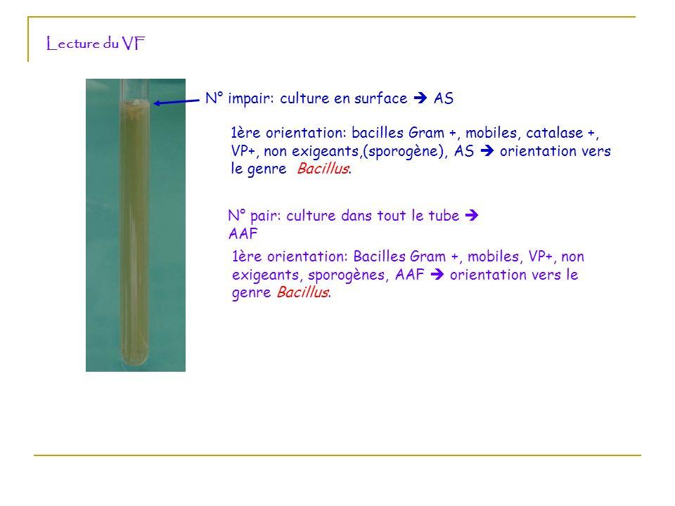 Lecture du VFN° impair: culture en surface  AS.