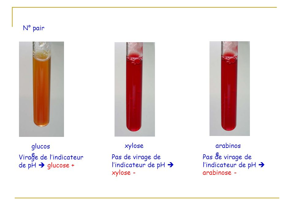 N° pairglucose. xylose. arabinose. Virage de l'indicateur de pH  glucose + Pas de virage de l'indicateur de pH  xylose -