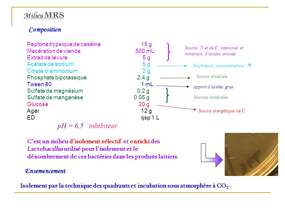 Milieu MRS Composition pH = 6,5 inhibiteur Ensemencement