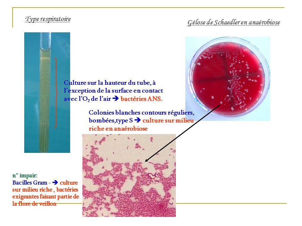 Gélose de Schaedler en anaérobiose