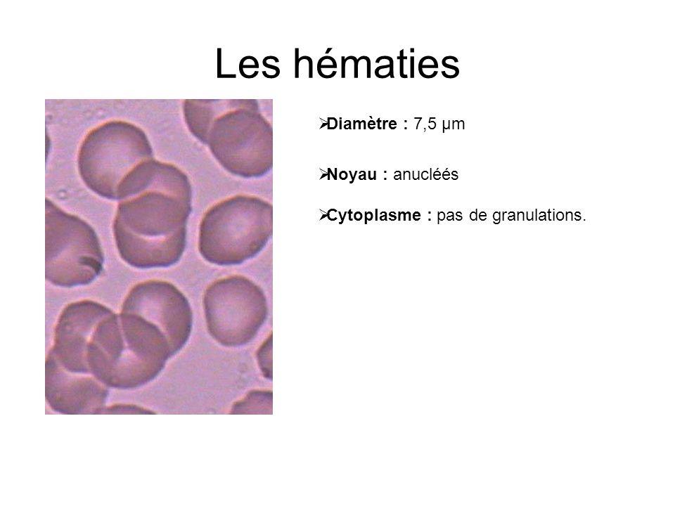 Les hématies Diamètre : 7,5 µm Noyau : anucléés