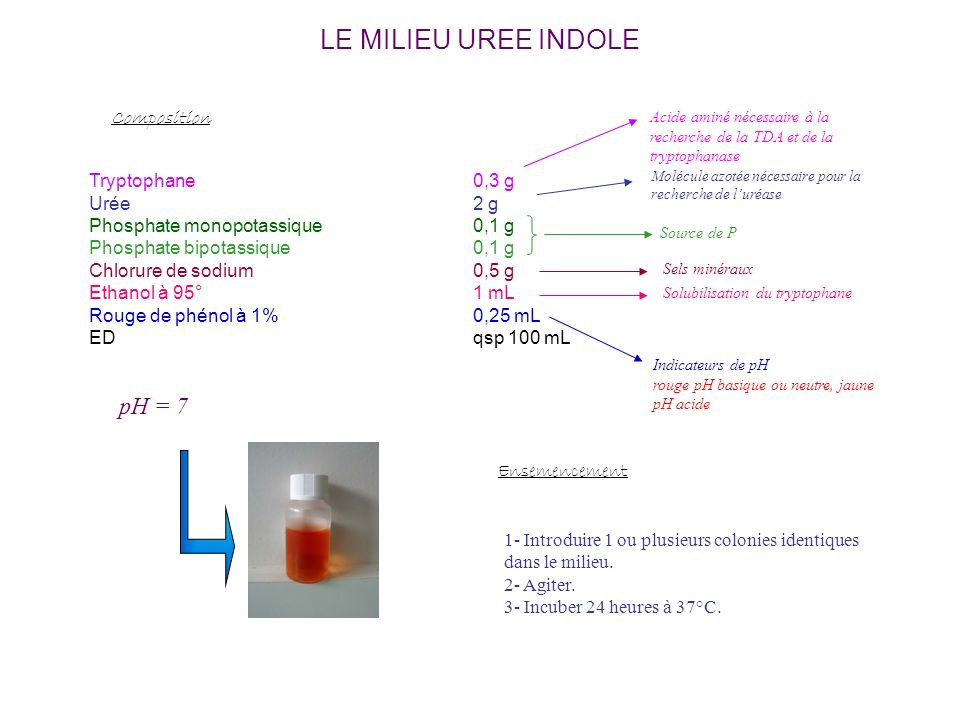 LE MILIEU UREE INDOLE pH = 7 Composition Tryptophane 0,3 g Urée 2 g