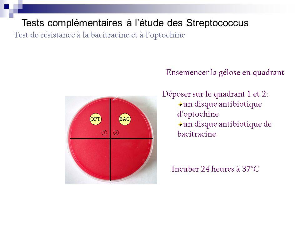 Tests complémentaires à l'étude des Streptococcus