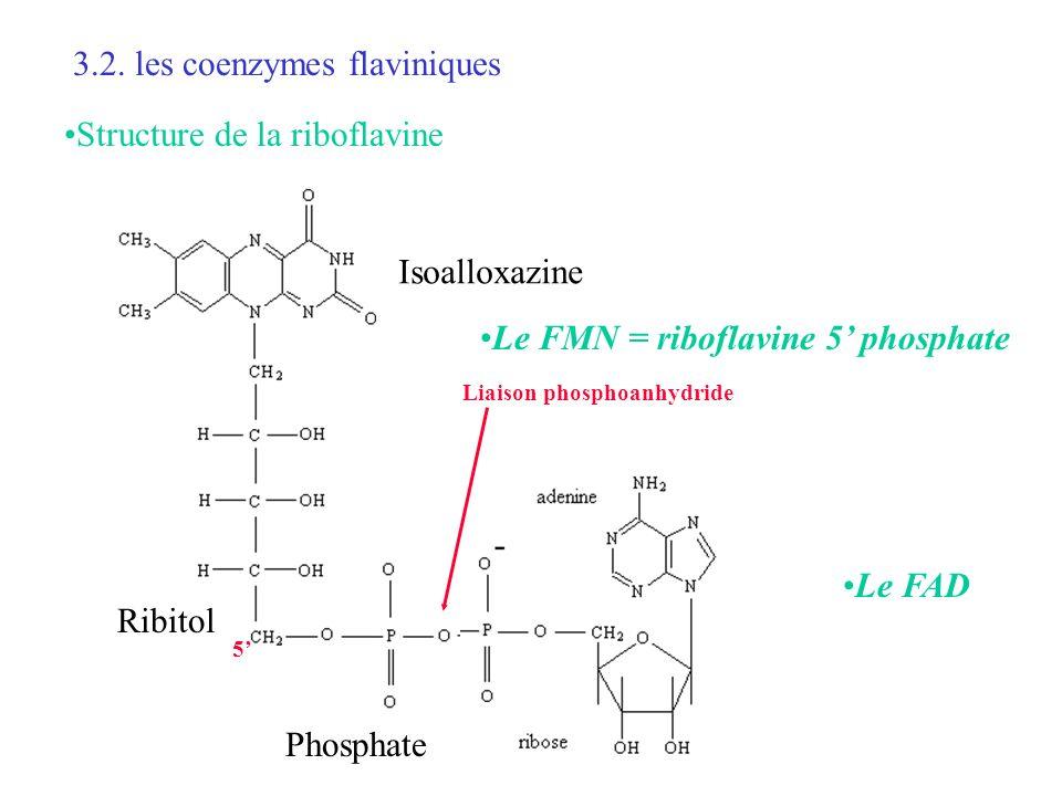 3.2. les coenzymes flaviniques