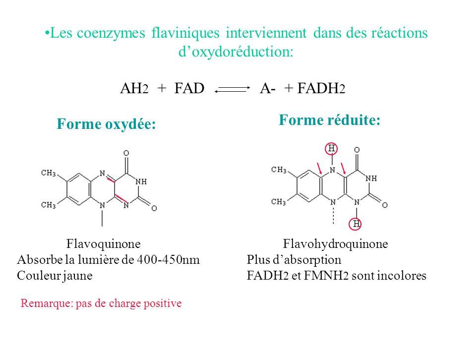 Les coenzymes flaviniques interviennent dans des réactions d'oxydoréduction: