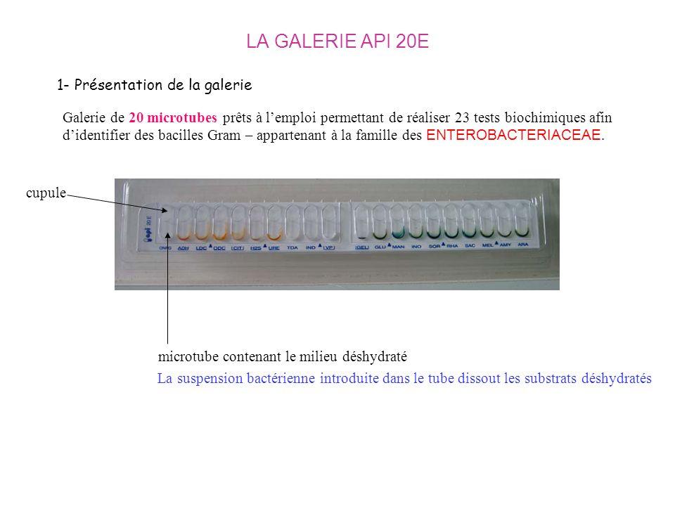 LA GALERIE API 20E 1- Présentation de la galerie