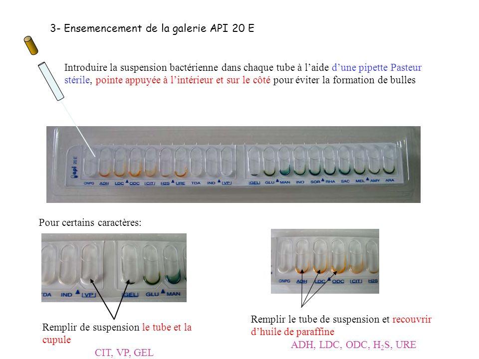 3- Ensemencement de la galerie API 20 E