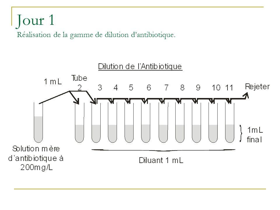 Jour 1 Réalisation de la gamme de dilution d'antibiotique.