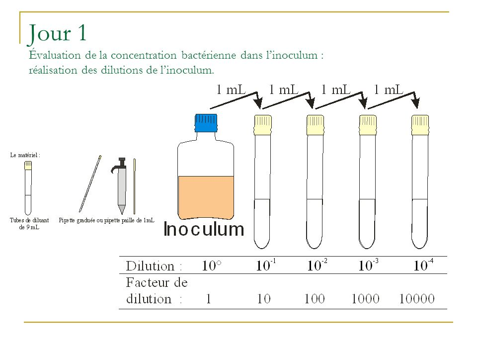Jour 1 Évaluation de la concentration bactérienne dans l'inoculum : réalisation des dilutions de l'inoculum.