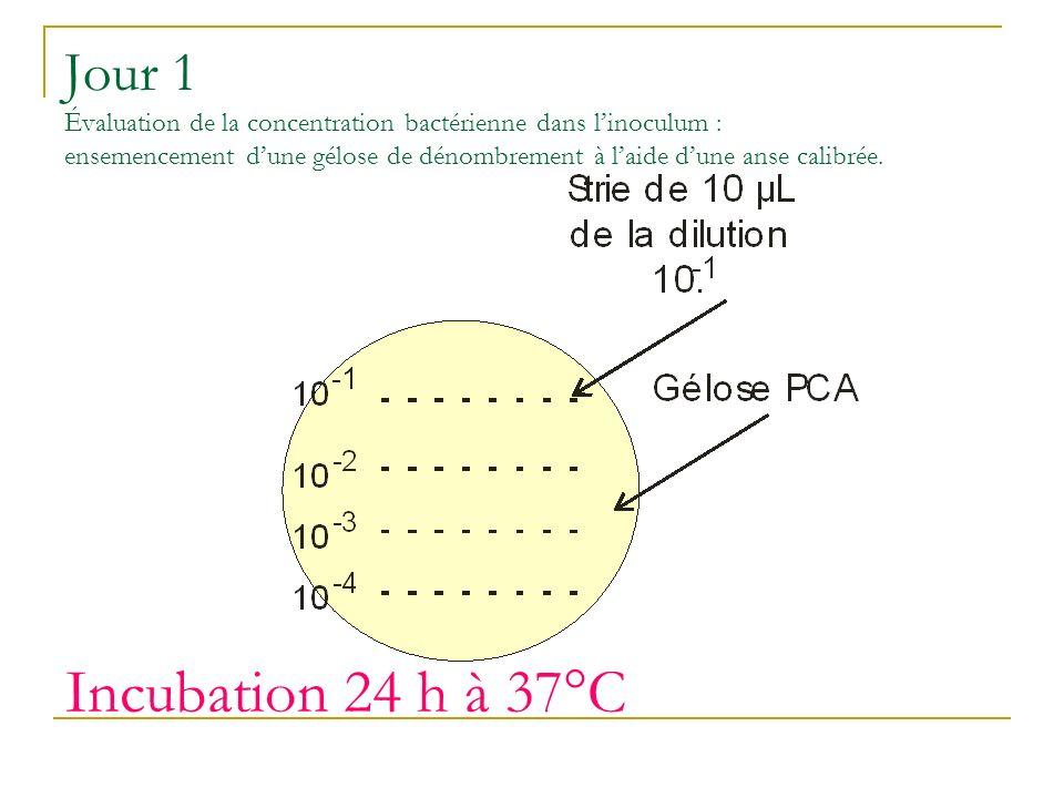 Jour 1 Évaluation de la concentration bactérienne dans l'inoculum : ensemencement d'une gélose de dénombrement à l'aide d'une anse calibrée.