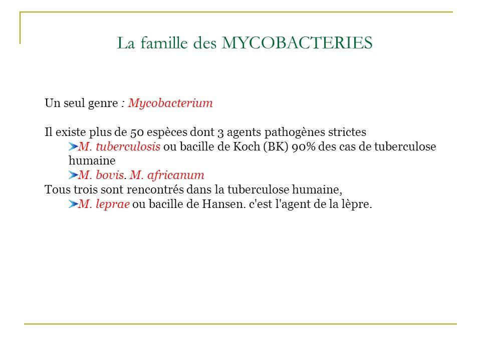 La famille des MYCOBACTERIES