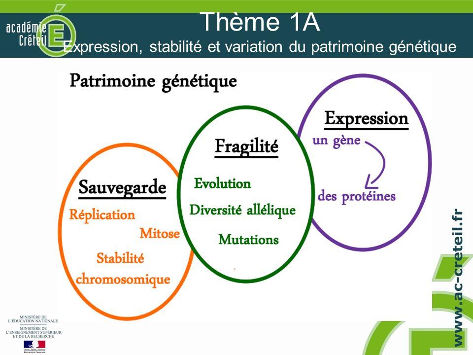 Thème 1A Expression, stabilité et variation du patrimoine génétique