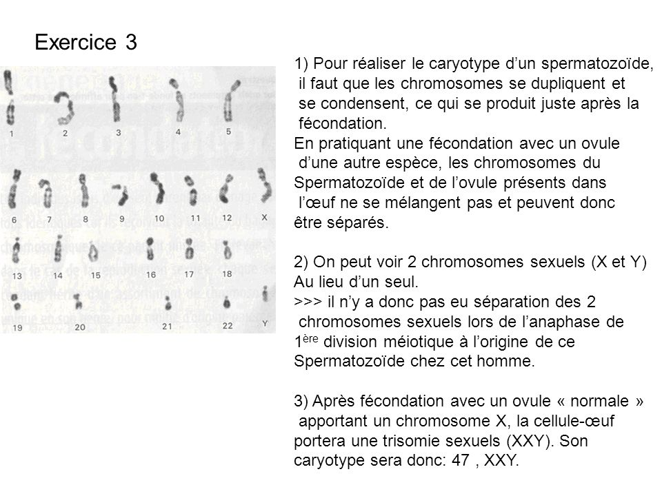 Exercice 3 1) Pour réaliser le caryotype d'un spermatozoïde,
