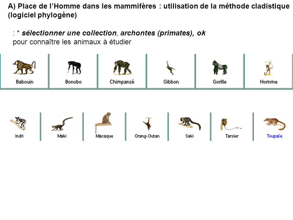 A) Place de l'Homme dans les mammifères : utilisation de la méthode cladistique
