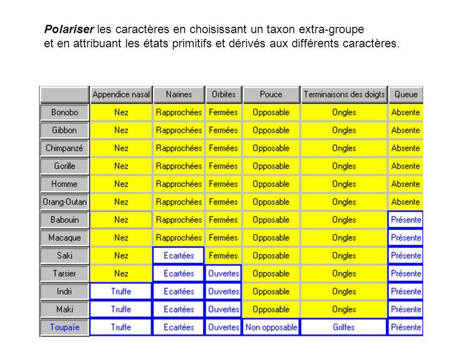 Polariser les caractères en choisissant un taxon extra-groupe