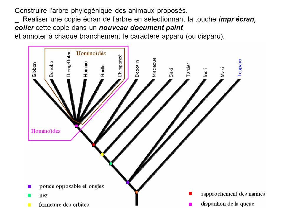 Construire l'arbre phylogénique des animaux proposés.
