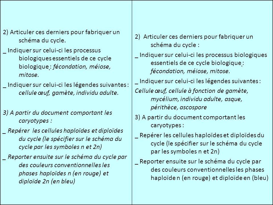 2) Articuler ces derniers pour fabriquer un schéma du cycle.