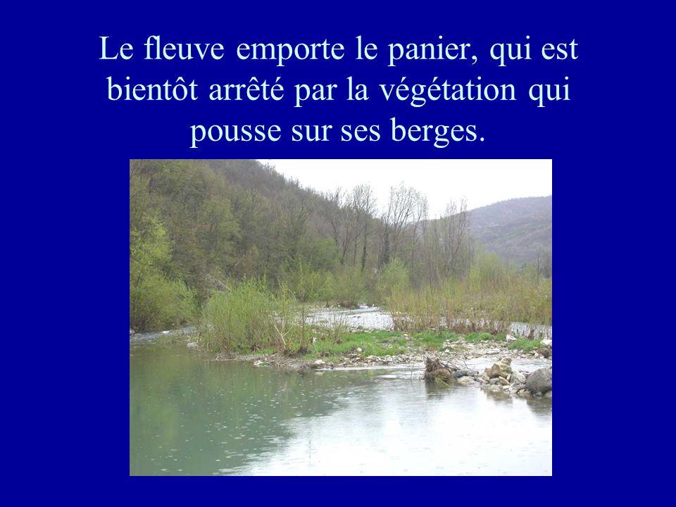 Le fleuve emporte le panier, qui est bientôt arrêté par la végétation qui pousse sur ses berges.