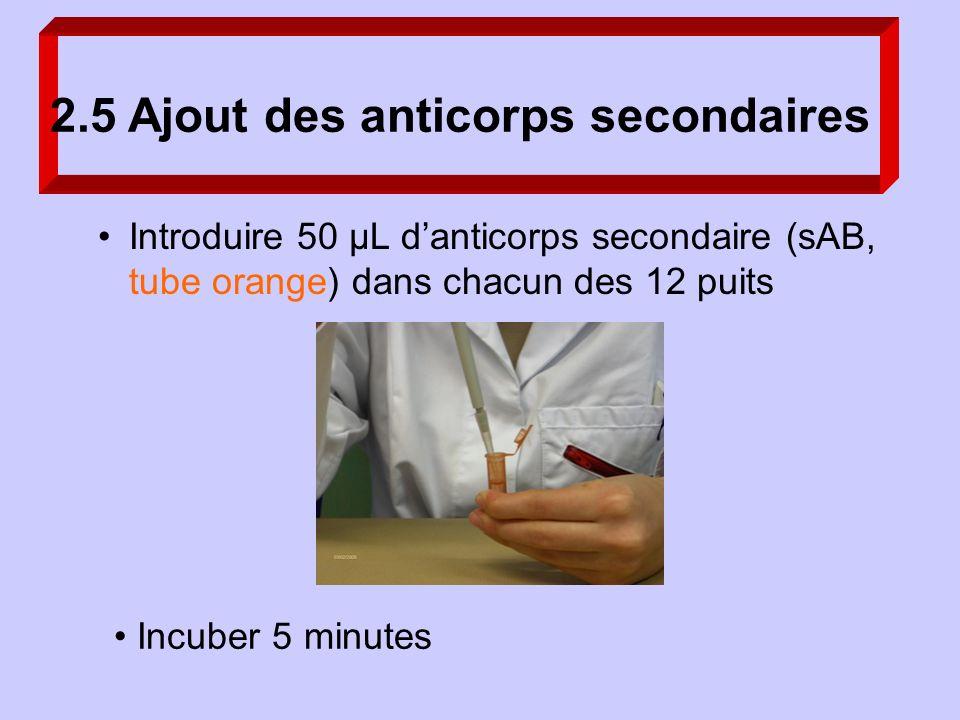 2.5 Ajout des anticorps secondaires