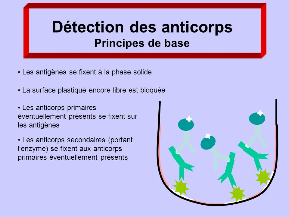 Détection des anticorps Principes de base