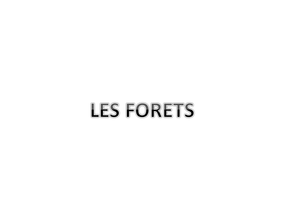 LES FORETS