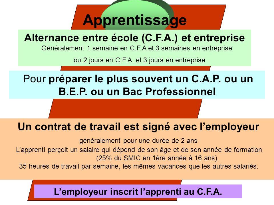 Apprentissage Alternance entre école (C.F.A.) et entreprise