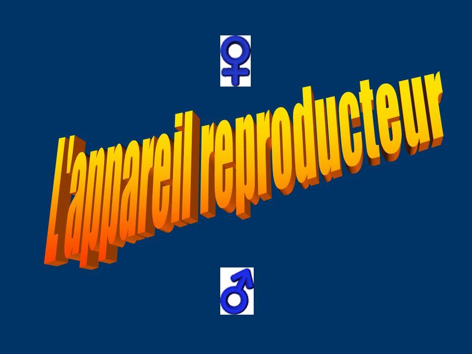 L appareil reproducteur