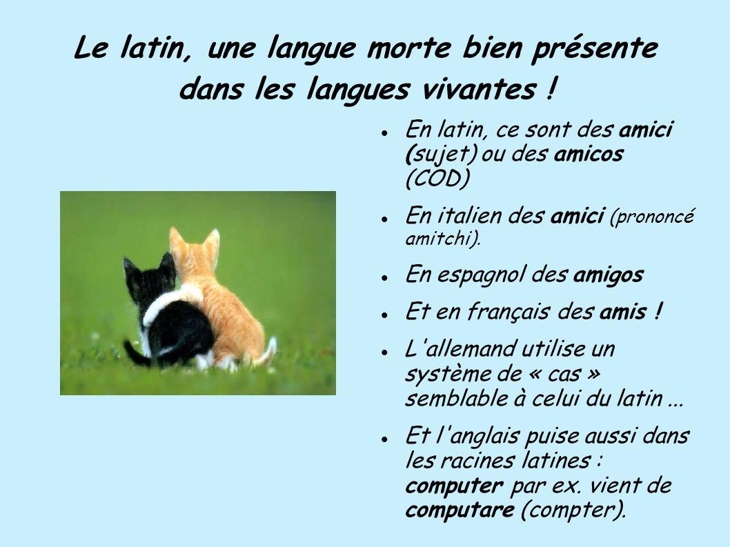 Le latin, une langue morte bien présente dans les langues vivantes !