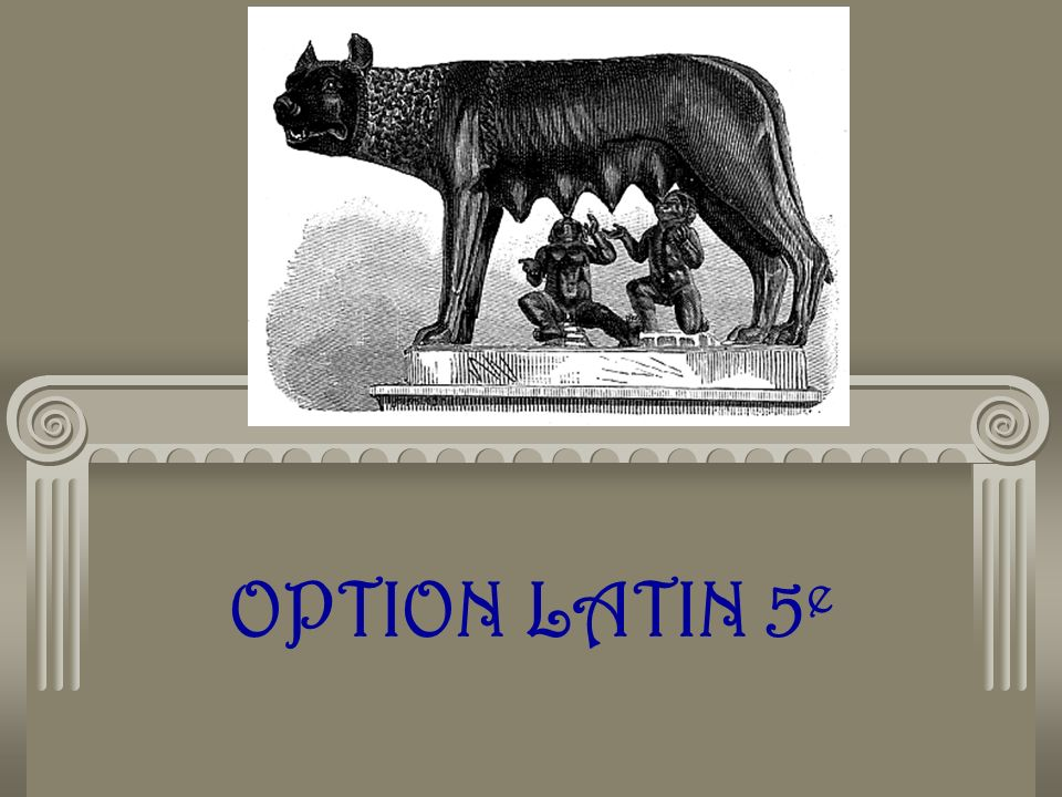 OPTION LATIN 5e